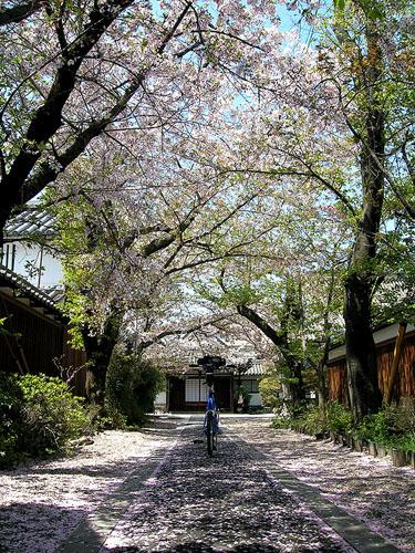 20090411橿原今井町.JPG